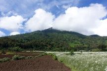 Mt. Bisoke, Rwanda